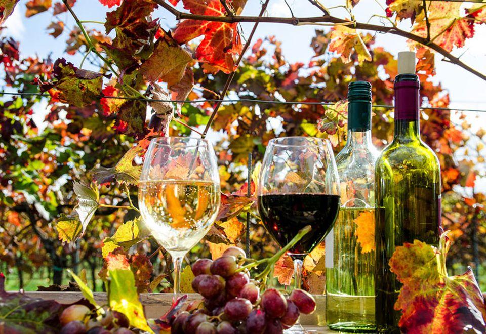 Deutschland: An der Deutschen Weinstraße wird die Weinernte mit Winzerfesten und Probetouren gefeiert