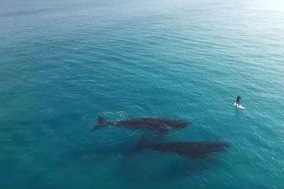 Video: Wassersport mit Walen