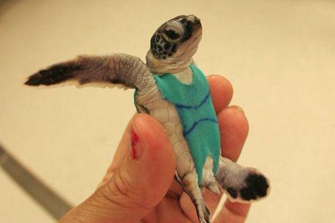 Meeresschildkröten: Unterwasser-Windeln