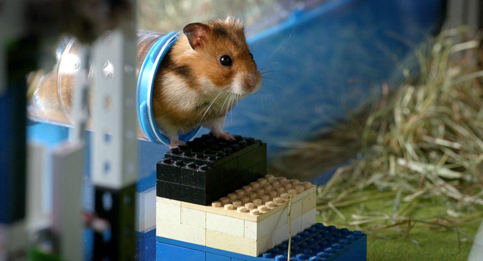Kino: Der schlaue und flinke Hamster Raffi erlebt ein großes Abenteuer