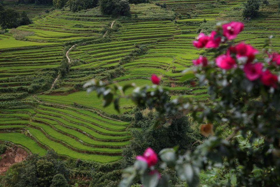 Die alten Reisterrassen der Hani