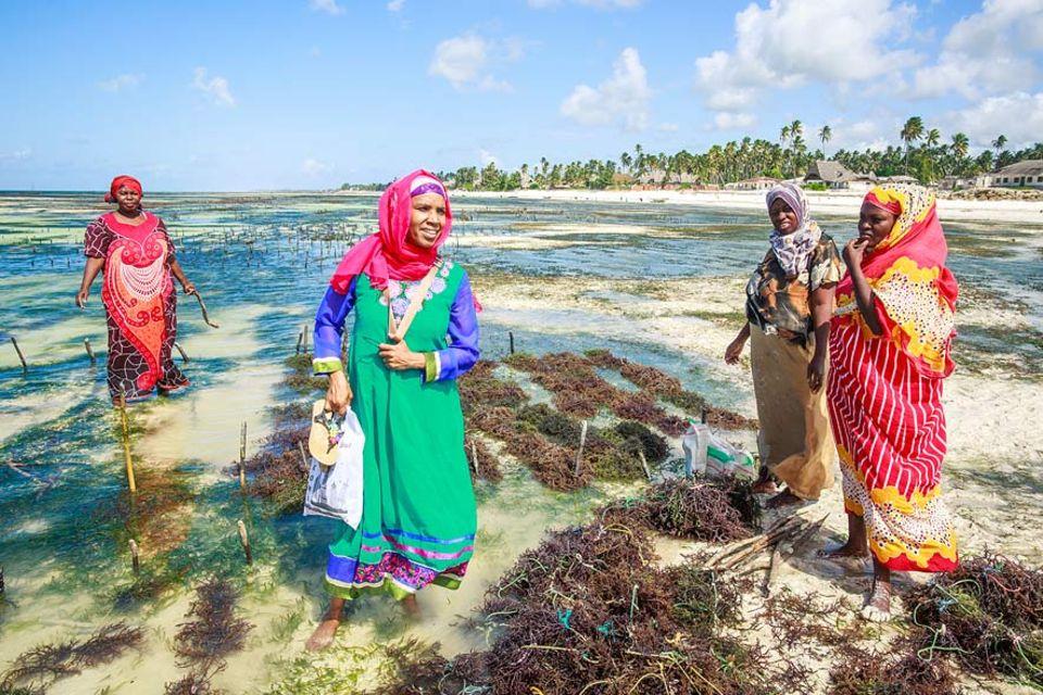 Seit 25 Jahren bauen Frauen auf Sansibar Rotalgen an. Sie werden für die Lebensmittel- und vor allem Kosmetikindustrie verwendet. Für die Frauen ein kleiner aber wichtiger Nebenverdienst