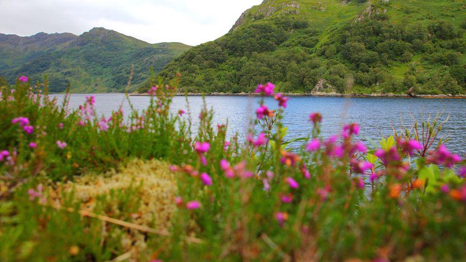 Knoydart in Schottland: Schottische Farbtupfer am Loch Hourn