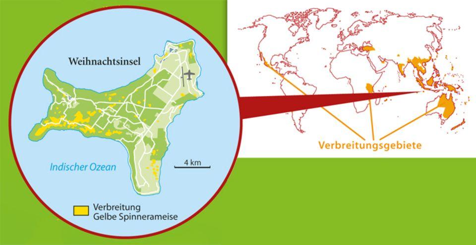 Tierlexikon: Die Gelbe Spinnerameise lebt gern in besonders warmen Gebieten