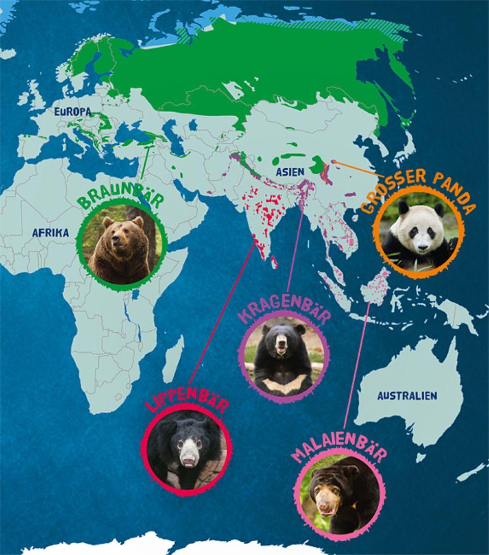 Tierlexikon: Der Maialenbär lebt vor allem in Südostasien, aber auch in Indien und auf Borneo