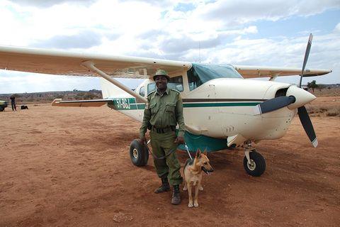Kenias Spürhunde – Rettung für die Elefanten