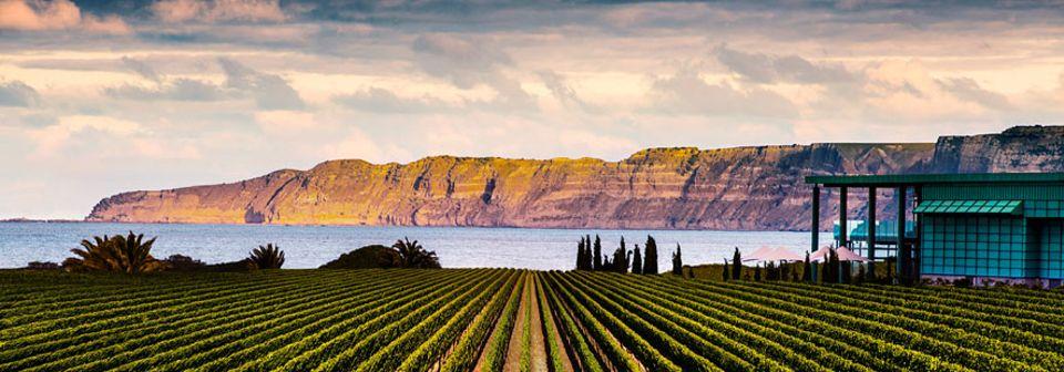 Neuseeland: Nicht ganz günstig, aber dennoch einen Besuch wert: Elephant Hill ist eines der schönsten Weingüter in Neuseelands zweitgrößter Anbauregion Hawkes Bay um Napier