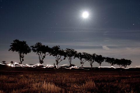 Botanik: Richten Bäume ihre Blätter nach dem Mond aus?
