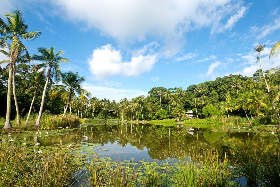 Pulau Ubin: Wildes Singapur: Auszeit von der Metropole