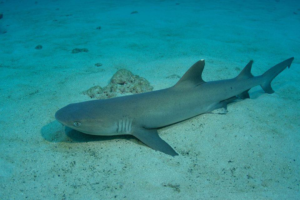 Cocos Island – Paradies für Haie?!