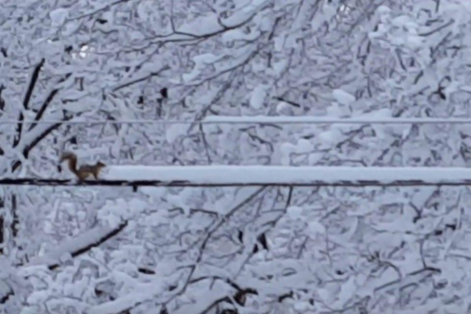 Video: Ein Eichhörnchen räumt Schnee