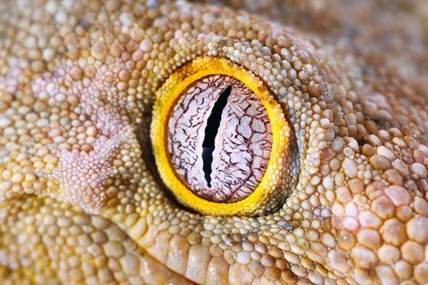 Biologie: Was die Pupille eines Tieres über seine Lebensweise verrät