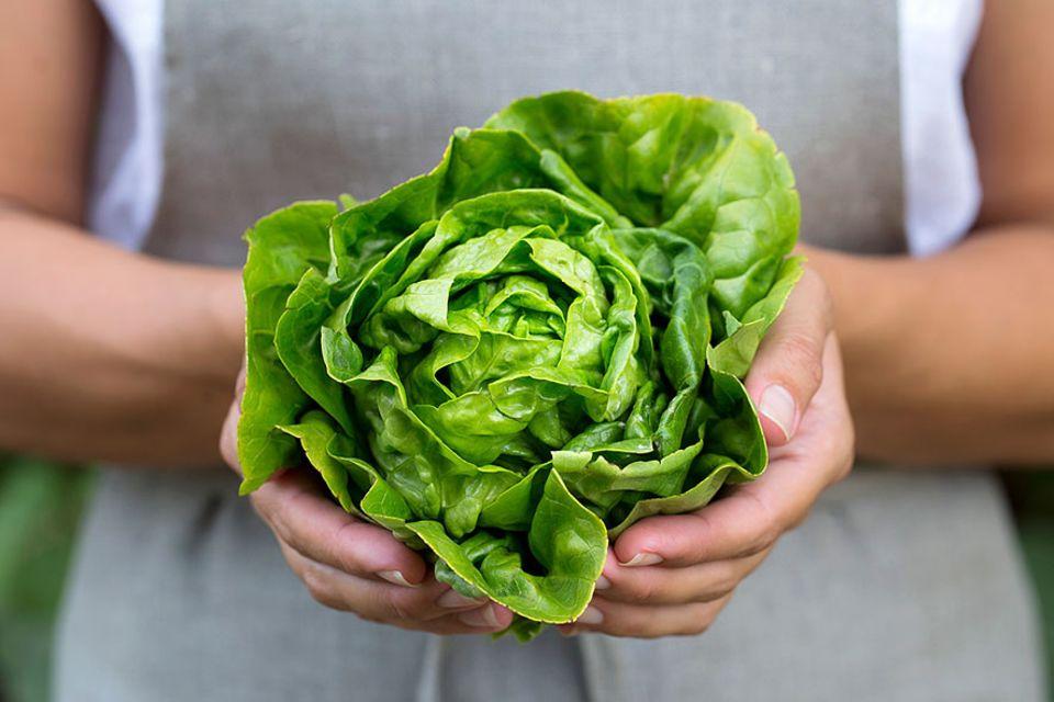 Ernährung: Studie: Kopfsalat schneidet schlecht ab. Schlechter jedenfalls als Schweinefleisch. Aber was heißt das?