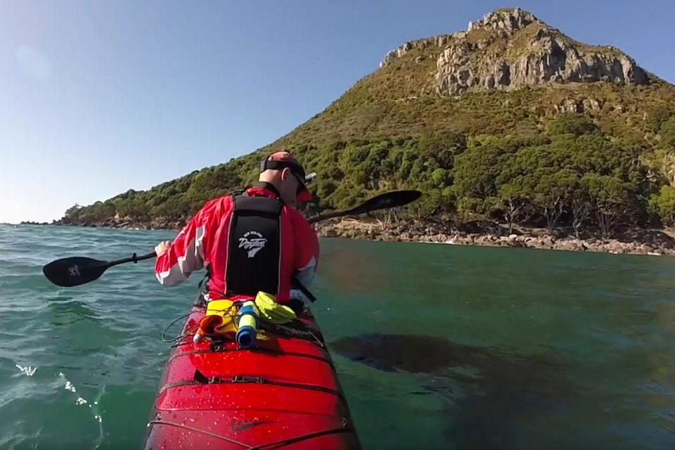 Video: Dieser Kajakfahrer wird seit Jahren von einem Orca begleitet