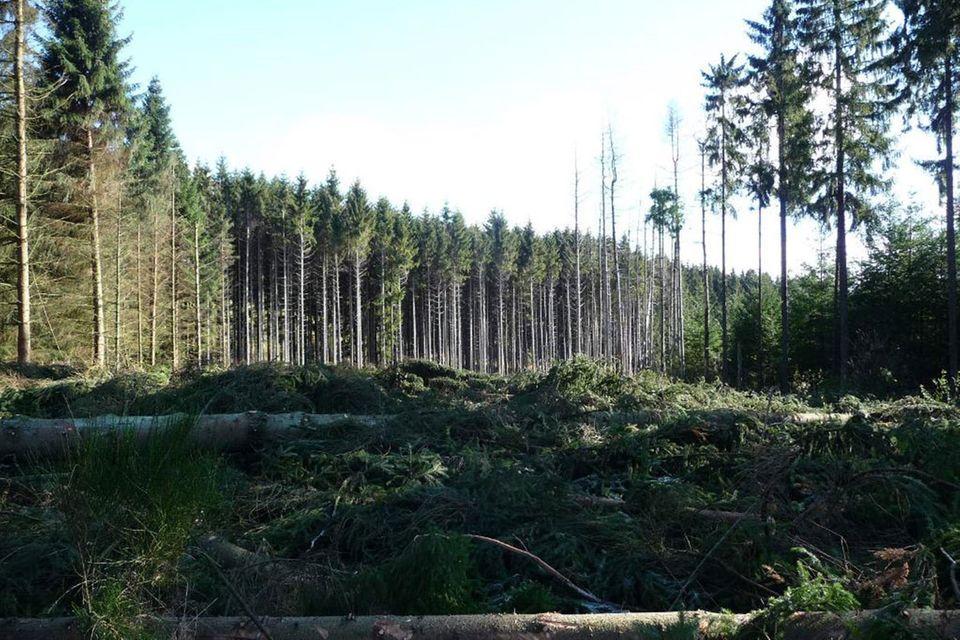 Forstwirtschaft in Deutschland: Profit oder Gemeinwohl?