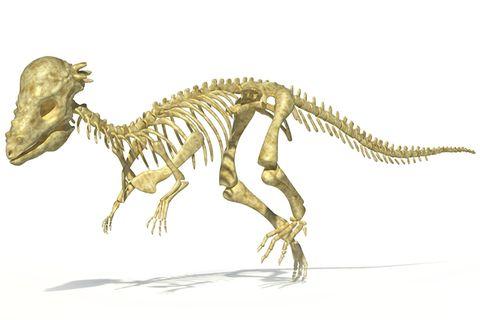 Dinosaurier: Warum wurden bislang kaum Saurierkinder entdeckt?