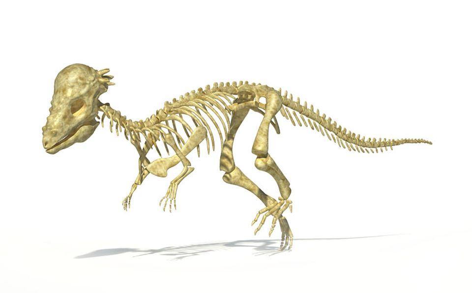 Dinosaurier: Pachycephalosaurus gilt nun als ausgewachsene Form von Stygimoloch und Dracorex, die früher als getrennte Arten gewertet wurden