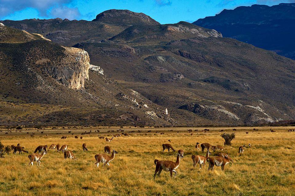 Patagonien: Das Chacabuco-Tal liegt in der Region Aysen und mitten im Patagonia-Park, das Schutzgebiet ist nun auch für die Öffentlichkeit zugänglich