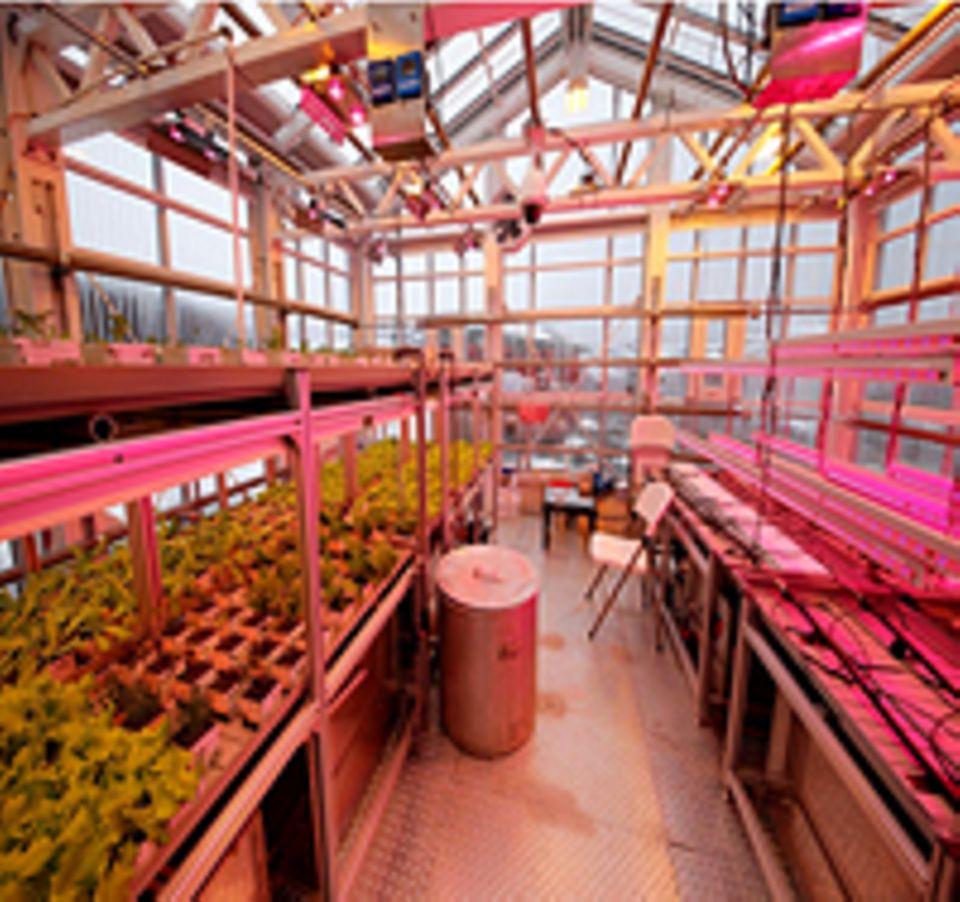 Tomaten, Gurken, grüner Pfeffer, Salat und Kräuter werden im Gewächshaus angebaut