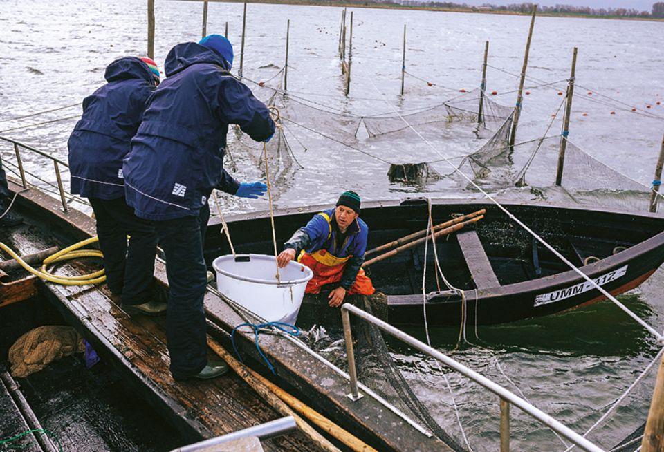 Fische: Sobald Henning May und Alexander Dressel vom Ozeaneum die Wannen an Bord gehievt haben, sortieren sie den Beifang aus - und setzen zappelnde Hechte und Dorsche zurück in die Ostsee