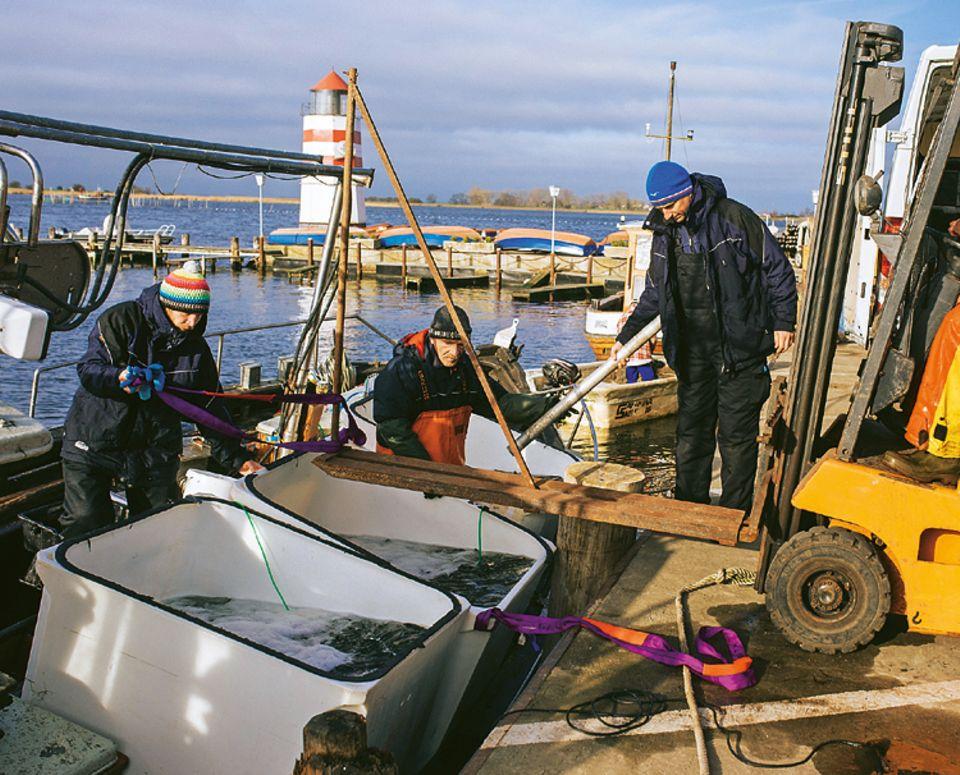 Fische: Der Kutter hat ordentlich Schlagseite, als er mit vollen Tanks im Hafen anlegt. Mit einem Gabelstabler verlädt Ivo Nordt diese in einen Transporter, der wenige Minuten später zum Meeresmuseum losbraust