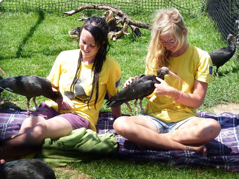 Zwischen den Jungvögeln und den menschlichen Vogelmüttern ist eine innige Beziehung entstanden. Die Waldrappe folgen ihnen überall hin und hoffentlich im Herbst auch über die Alpen ins Winterquartier