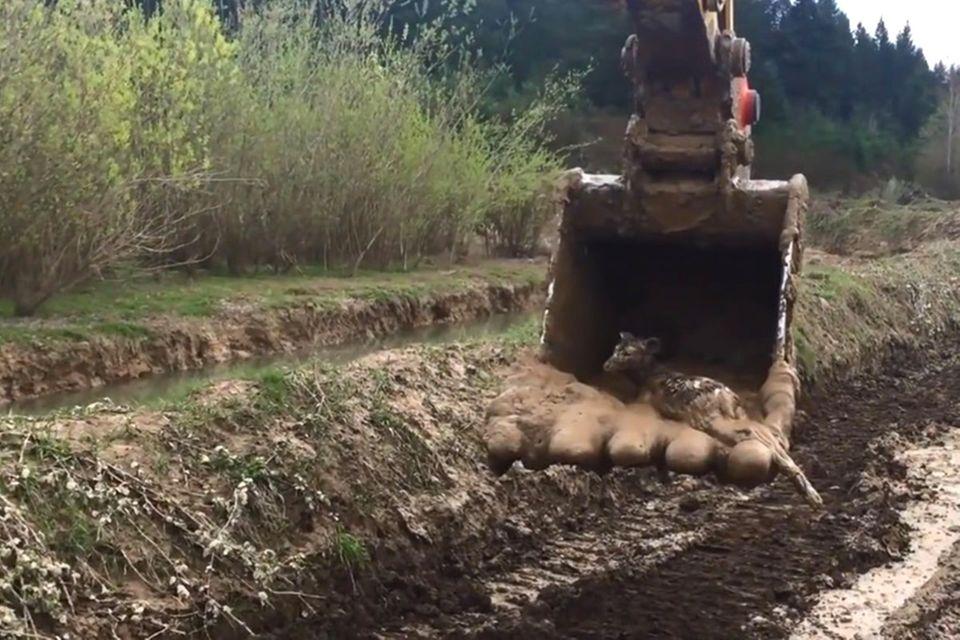 USA: Bauarbeiter rettet hilflose Hirsche - mit seinem Bagger