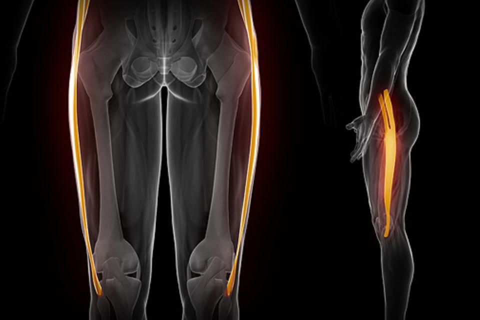 Bindegewebe: Faszien übertragen die Kraft der Muskeln auf Knochen und Gelenke