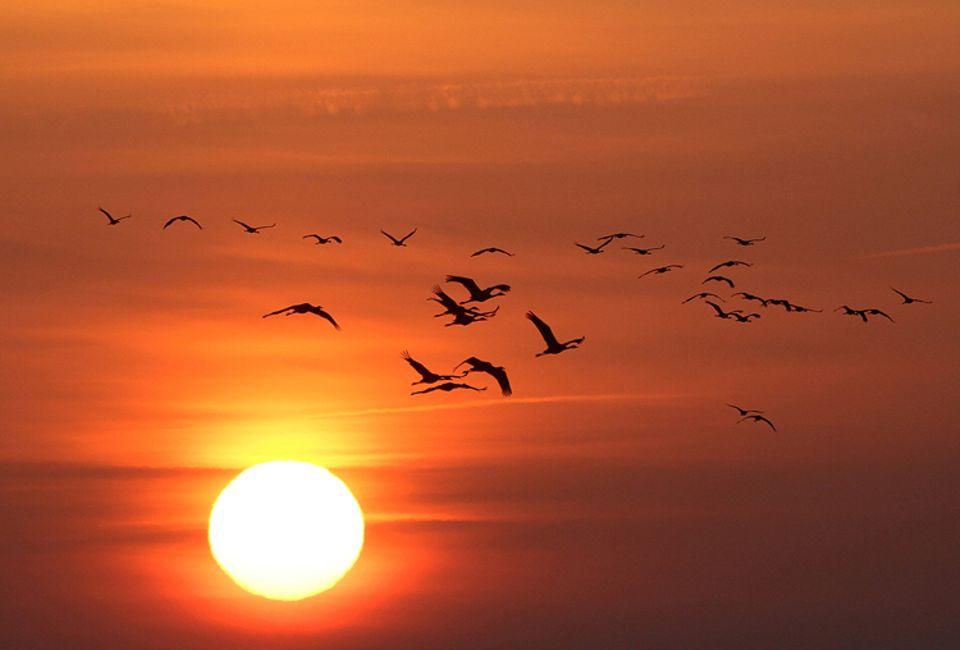 GEO Tag der Artenvielfalt: Kraniche in der Naturlandschaft Wanninchen