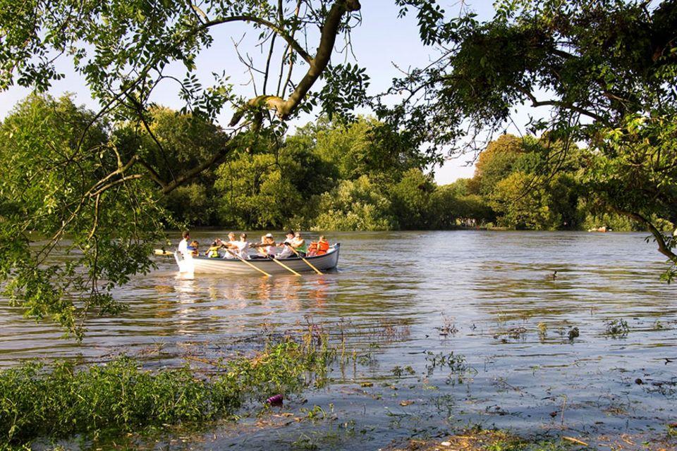 Richmond upon Thames: Ruderer können zwischen üppigen Bäumen die Villen am Ufer erspähen
