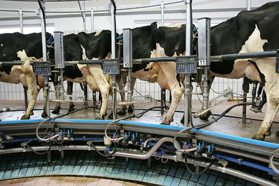 Milchpreis: Zu viel Milch verdirbt die Preise - in Deutschland, der EU und Übersee