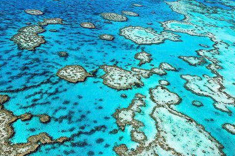 Australien: Werden Killermaschinen die Seesterne im Great Barrier Reef ausrotten?