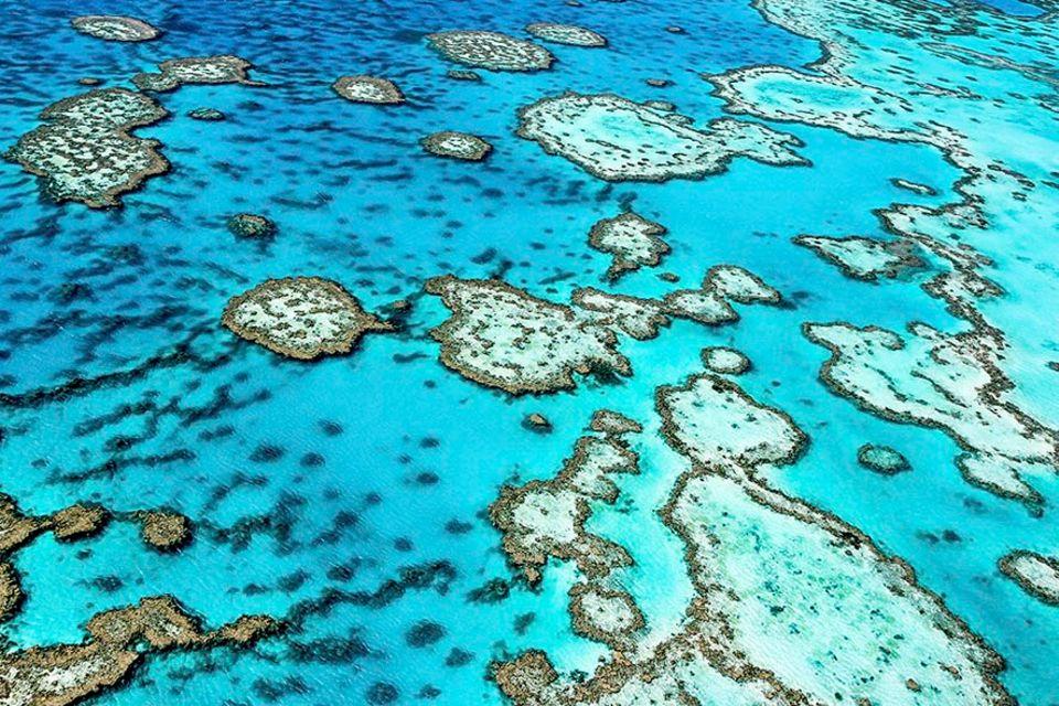 Australien: Das Great Barrier Reef ist zunehmend bedroht - durch den Klimawandel, Wasserverschmutzung und die Seesternplage