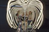 Wal-Skelett: Ein tierisches Puzzle - Bild 16