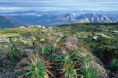 Fotogalerie: Tasmanien