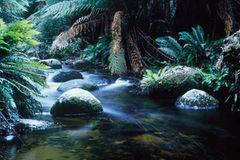 Fotogalerie: Tasmanien - Bild 2