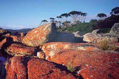 Fotogalerie: Tasmanien - Bild 4