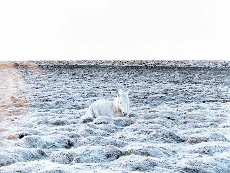 Fotoshow: Islandpferde