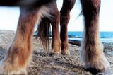 Fotoshow: Islandpferde - Bild 7