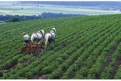 Ökolandbau: Landwirtschaft ohne Gift und Gentechnik