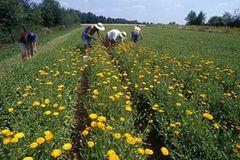Ökolandbau: Landwirtschaft ohne Gift und Gentechnik - Bild 2