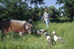 Ökolandbau: Landwirtschaft ohne Gift und Gentechnik - Bild 3