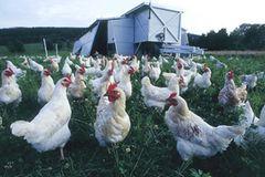 Ökolandbau: Landwirtschaft ohne Gift und Gentechnik - Bild 4