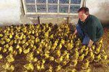 Ökolandbau: Landwirtschaft ohne Gift und Gentechnik - Bild 5