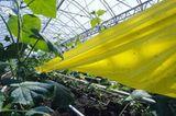 Ökolandbau: Landwirtschaft ohne Gift und Gentechnik - Bild 6