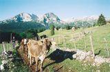 Fotogalerie: Montenegro - Bild 8