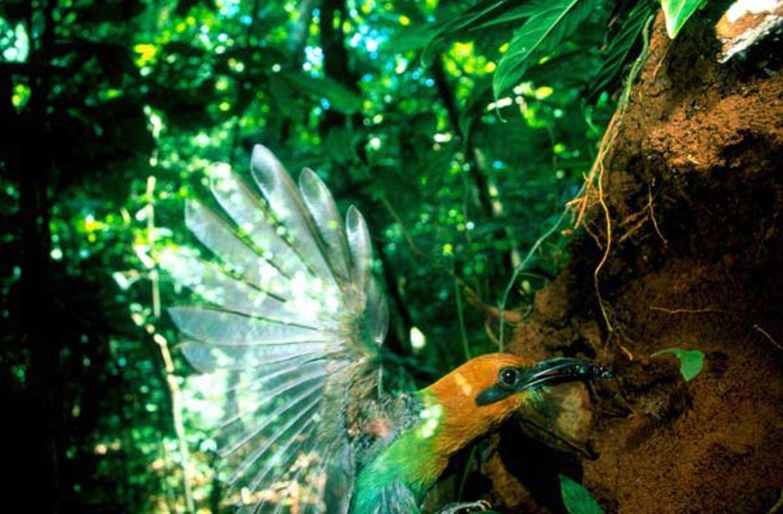 Fotostrecke: Zu Hause im Regenwald