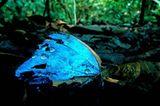 Fotostrecke: Zu Hause im Regenwald - Bild 3