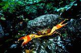 Fotostrecke: Zu Hause im Regenwald - Bild 17