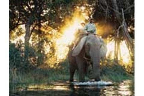 Botswana: Die Schule der Elefanten